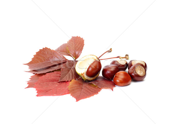 Autumn picture of leaves and chestnuts. Stock photo © lypnyk2