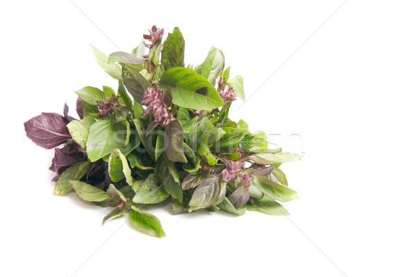 Pachnący bazylia biały herb odizolowany jedzenie Zdjęcia stock © lypnyk2