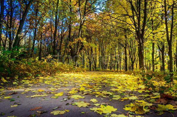 út fedett lomb csodálatos ősz fa Stock fotó © lypnyk2