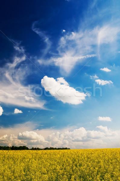 Meraviglioso campo cielo primavera bianco Foto d'archivio © lypnyk2