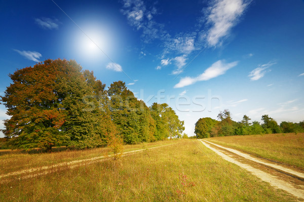 Wonderful  large oak trees and sky by autumn. Stock photo © lypnyk2