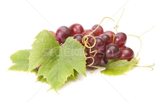 Lédús szőlő fehér gyülekezet izolált zöld Stock fotó © lypnyk2