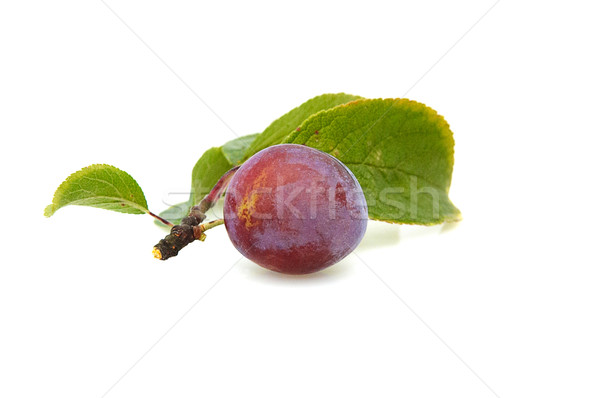 Fresh plum. Stock photo © lypnyk2