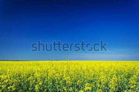 Vibrante cielo azul maravilloso sin nubes cielo flor Foto stock © lypnyk2