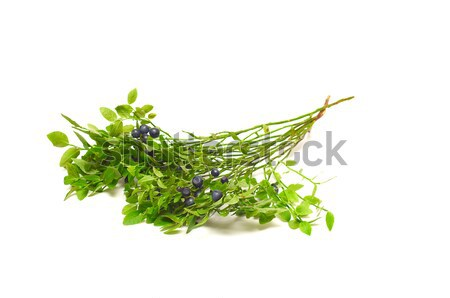 Ripe huckleberry on a white background. Stock photo © lypnyk2