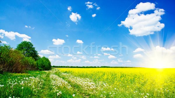 Lovely sunbeams above golden rapefield by springtime. Stock photo © lypnyk2