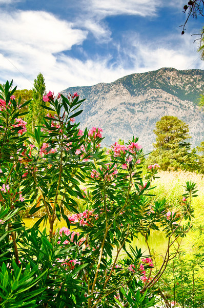 Wonderful landscape of mountains and  flowers by summer. Stock photo © lypnyk2