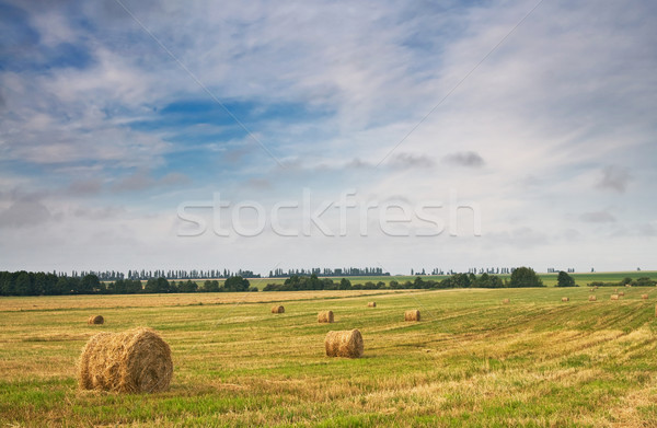 Beautiful stubble field with hay bales by summer. Stock photo © lypnyk2