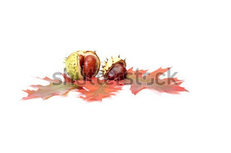 Beautiful autumn leaves and chestnuts on a white. Stock photo © lypnyk2