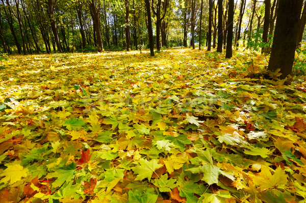 Autumn. came in the grove. Stock photo © lypnyk2
