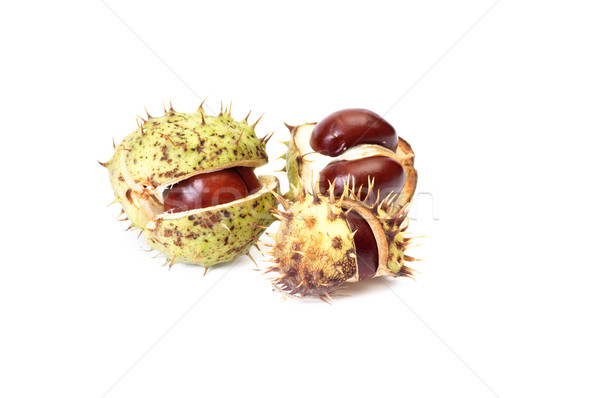 Opened chestnuts on a white. Stock photo © lypnyk2