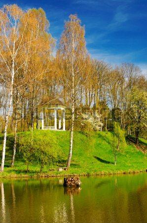 Spring  grove next to the pond. Stock photo © lypnyk2