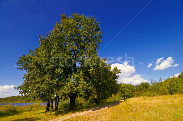 Wonderful  large oak tree and pond by autumn. Stock photo © lypnyk2