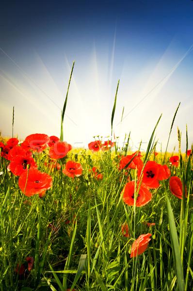 Wonderful meadow by summer. Stock photo © lypnyk2