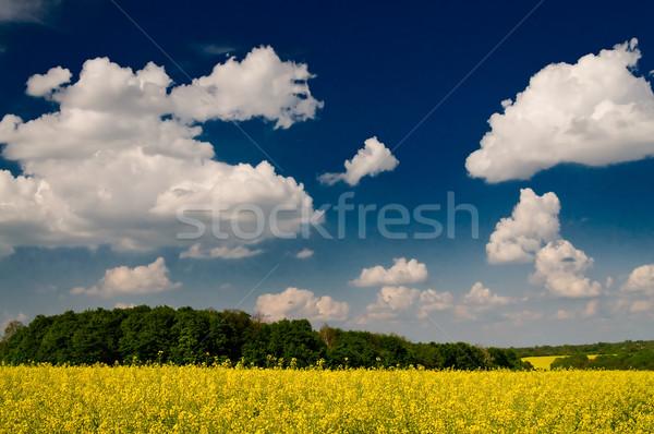 Stock fotó: Csodálatos · arany · mező · fehér · felhők · báj