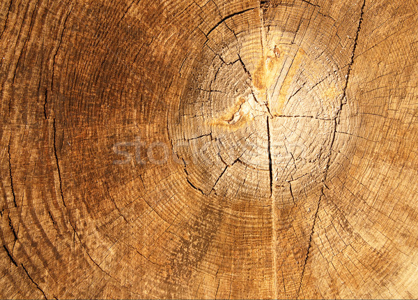 The old brown cracked stump. Stock photo © lypnyk2
