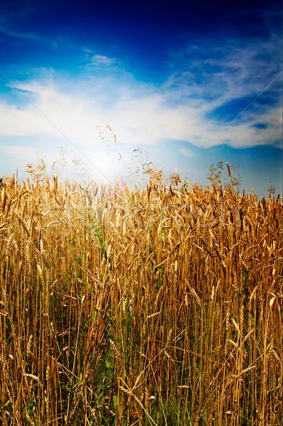 Summer landscape and splendid sky. Stock photo © lypnyk2