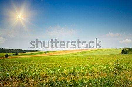 Zomer landschap sereen weide prachtig blauwe hemel Stockfoto © lypnyk2