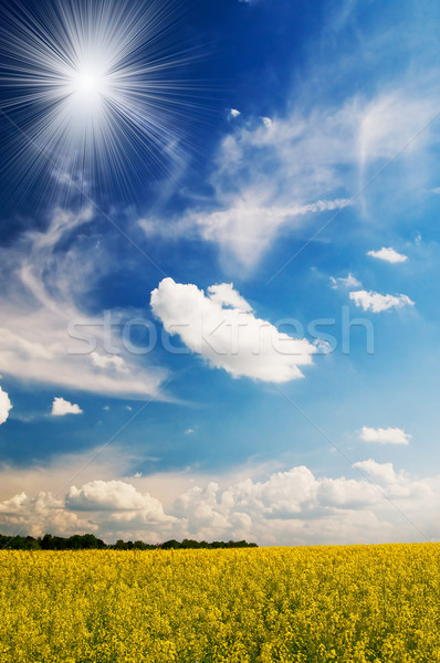 безмятежность области пшеницы солнце весна Сток-фото © lypnyk2