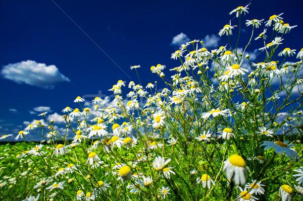 Stok fotoğraf: Sessizlik · mavi · gökyüzü · gökyüzü · bulutlar · alan · yeşil