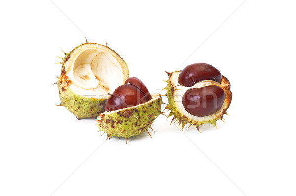 Ripe chestnuts on a white. Stock photo © lypnyk2