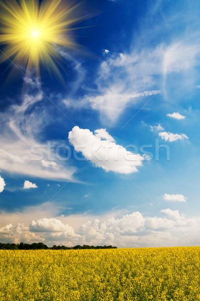 Calm landscape. Stock photo © lypnyk2