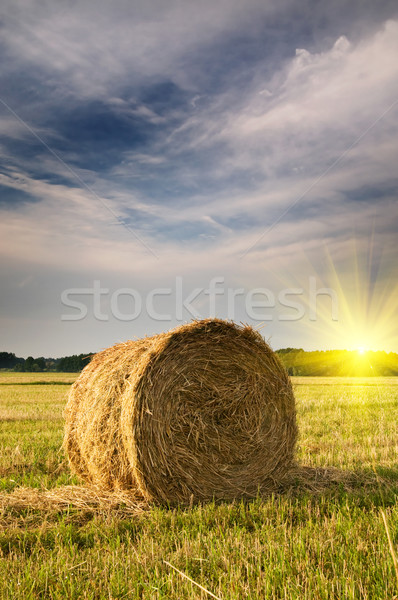 Belle chaumes domaine foin ciel Photo stock © lypnyk2
