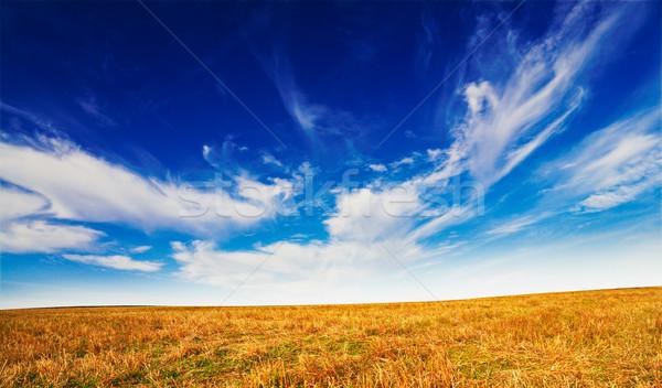 Wonderful field by autumn. Stock photo © lypnyk2