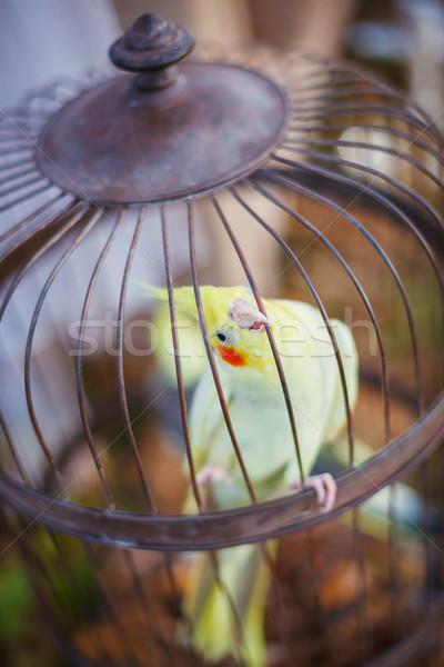 Egy papagáj klasszikus sejt tavasz háttér Stock fotó © macsim