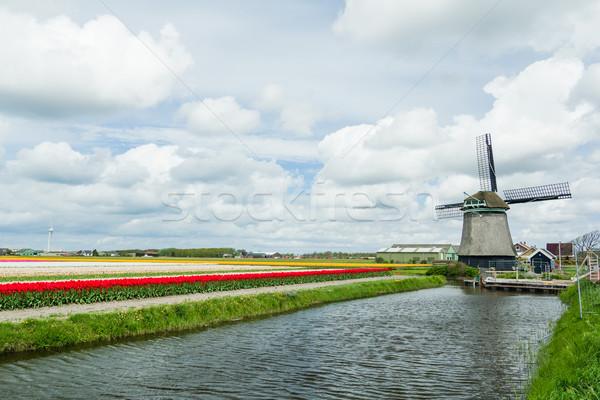 Dutch windmill. Netherlands Stock photo © macsim