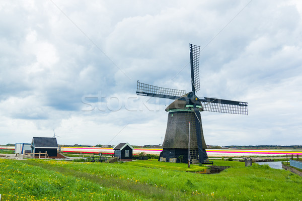 Moulin à vent printemps herbe jardin été Photo stock © macsim