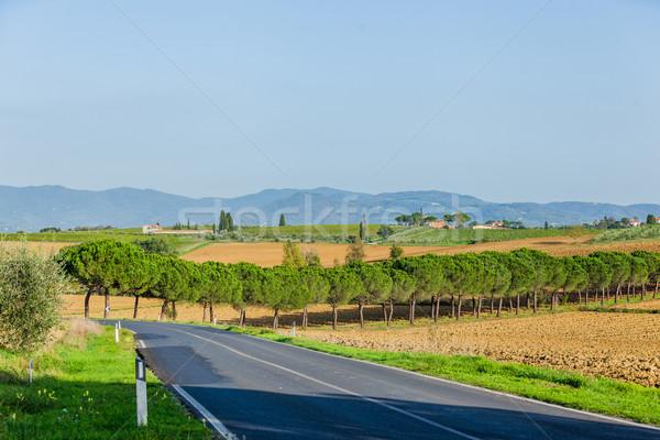 Toscano paisagem típico belo grama esquiar Foto stock © macsim