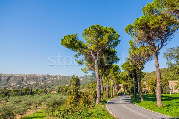 Weg pine bomen Toscane mooie Italië Stockfoto © macsim