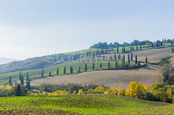 Tuscan landscape Stock photo © macsim