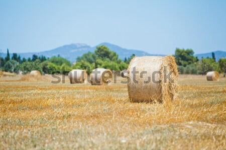 Hooiberg veld Geel landschap schoonheid boerderij Stockfoto © macsim