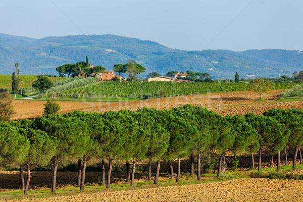 Yol çam ağaçlar Toskana güzel İtalya Stok fotoğraf © macsim