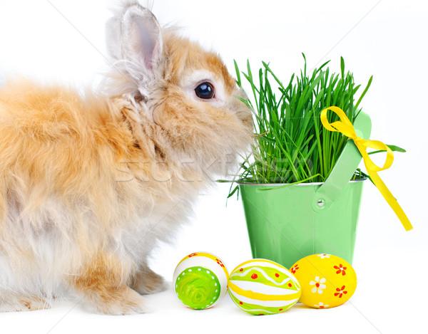 Bunny paaseieren mand voorjaar gras Pasen Stockfoto © macsim
