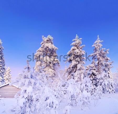 ストックフォト: 冬 · 妖精 · 雪 · 森林 · 松 · 木
