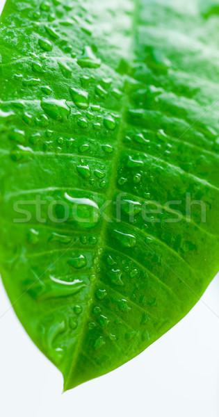 Groen blad druppels water verticaal textuur Stockfoto © macsim