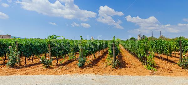 Mallorca Spanyolország panoráma gyönyörű erdő tájkép Stock fotó © macsim