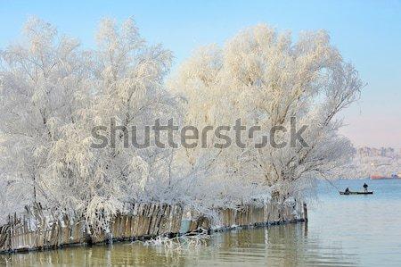 морозный зима деревья птиц Дунай реке Сток-фото © mady70