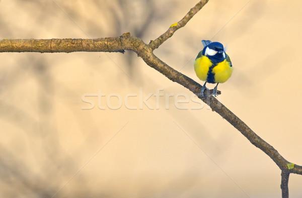 Pequeno ramo madeira floresta neve Foto stock © mady70
