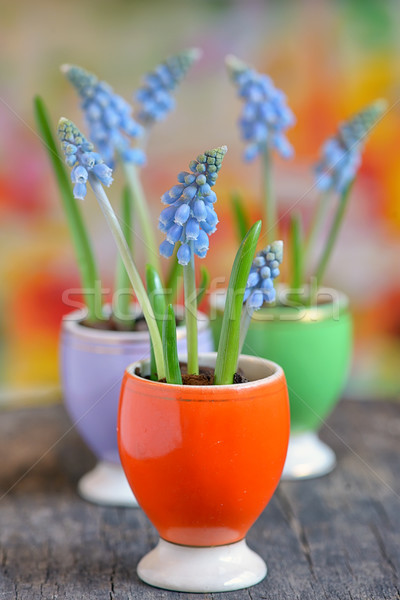 Flores pequeno primavera natureza luz jardim Foto stock © mady70