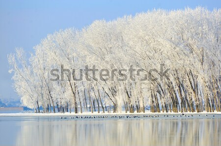 Дунай реке зима время небе трава Сток-фото © mady70