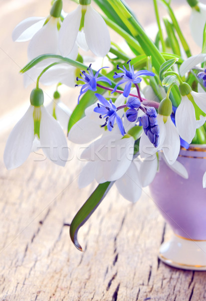 snowdrops in a vase Stock photo © mady70