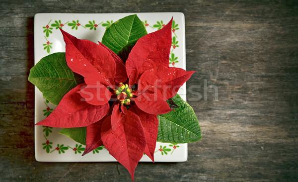 ストックフォト: 赤 · クリスマス · 花 · 孤立した · 古い · 木製