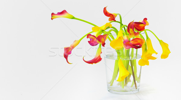 calla lilies in vase Stock photo © mady70