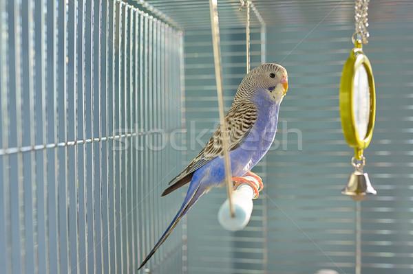 Papuga klatki oka charakter piękna Pióro Zdjęcia stock © mady70