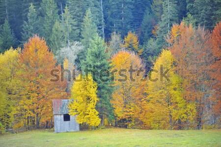 Fall colors  Stock photo © mady70