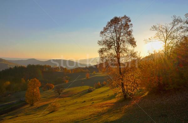Huş ağacı orman güneşli sonbahar sabah çim Stok fotoğraf © mady70